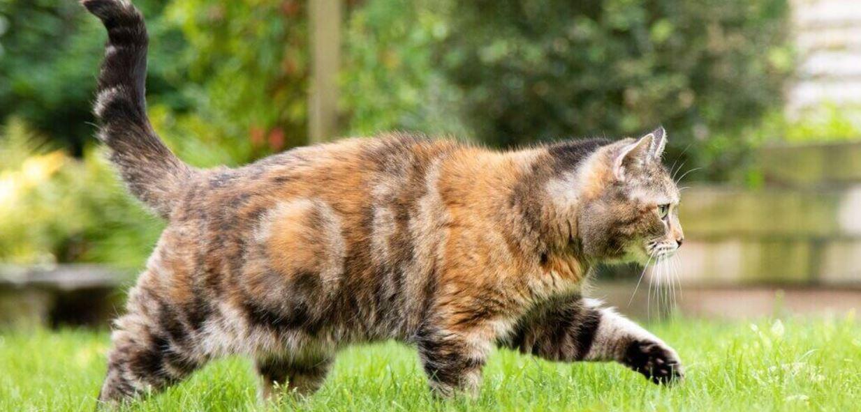 Anatomie van een kat