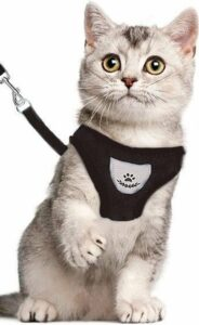 Kattentuigje - Kattenharnas - Kattentuig Met Looplijn - Hondentuigje - Hondenharnas - Zwart