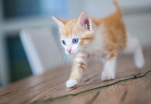 Op welke leeftijd is een kat volwassen