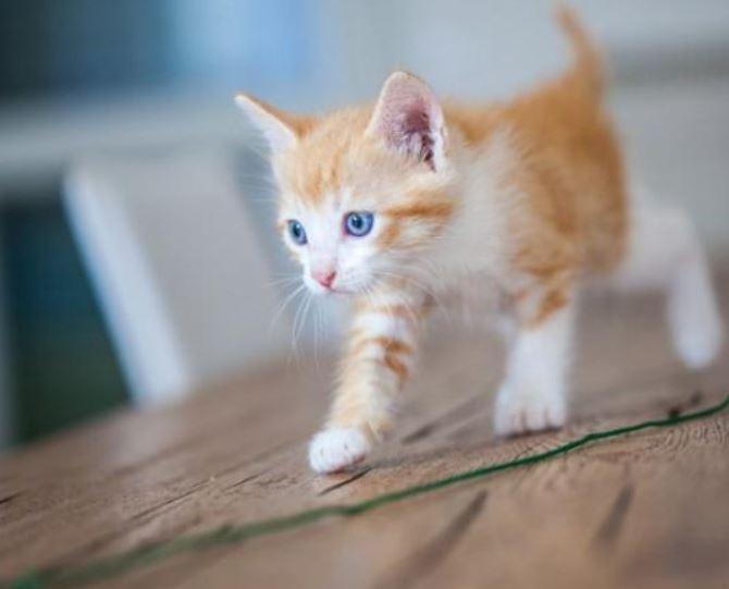 Op welke leeftijd zijn katten volgroeid