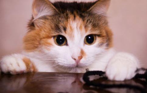 Redenen waarom mijn kat kan kwijlen