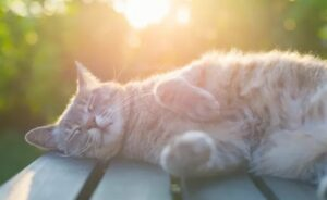 Waarom slapen katten graag bovenop je.