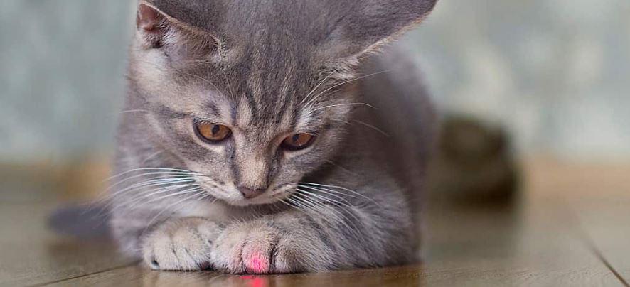 Zijn laserpennen veilig voor katten