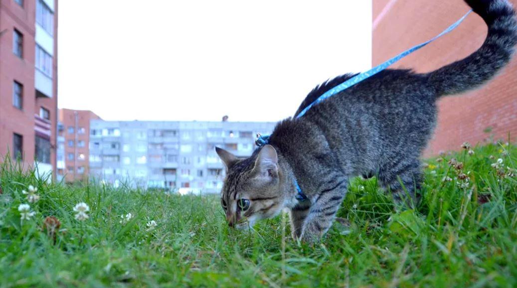 clickertraining kat