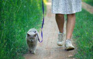kat aan de lijn in de tuin