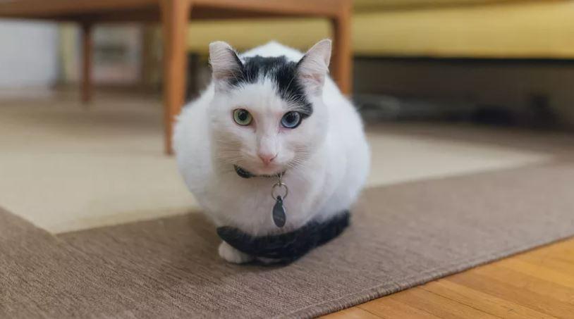 kat plast in huis