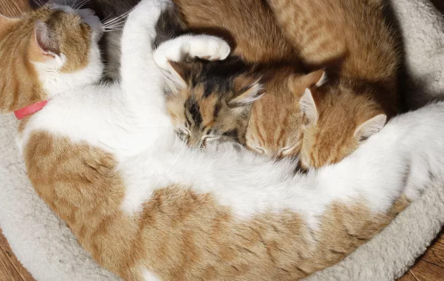 wanneer mag een kitten weg bij de moeder
