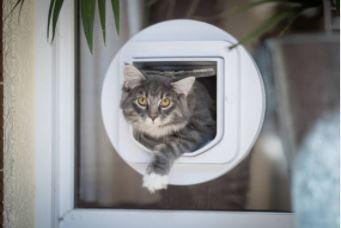 Heb ik een kattenluik nodig