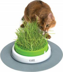 Cat-It Senses 2.0 Grass Planter - Kattengras