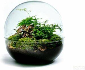 Growing Concepts Biodome - Botanisch 30cm - 30cm - Botanisch