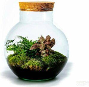 Growing Concepts Bolder - Botanisch 30cm - 18cm - Botanisch