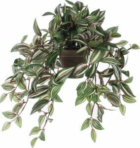 Mica Decorations - Tradescantia Hangend L45B25H25 Groen In Pot Stan D11.5 Grijs