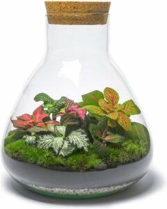 Outlandish Terrariums DIY Kleurrijk Fittonia Terrarium - De Erlenmeyer - H26.5 B22.5 cm