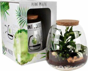 Plant in glas - Ecosysteem in Glas - Ecoworld Tropical Biosphere - Met 3 leuke Planten (Pannenkoekenplant, Sedum, Chlorophytum) - Ø 23.5 cm - Hoogte 25 cm