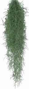 Tillandsia Usneoides - Luchtplant - Tropische hangplant - ↑50-60 cm