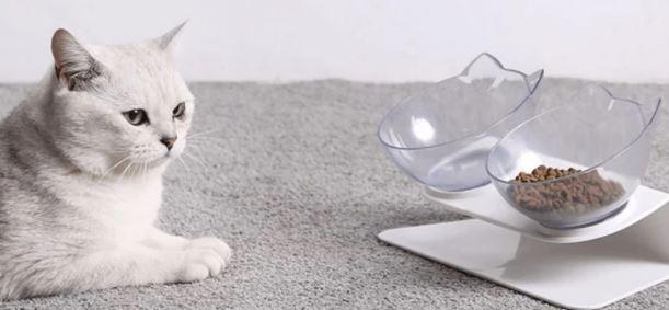 anti schrokbak kat