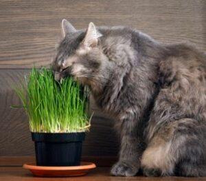 geschikte planten voor katten