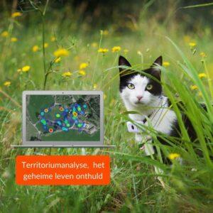 gps kattenhalsband