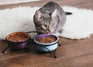 hypoallergeen kattenvoer