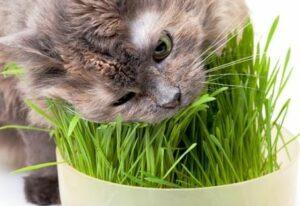 katveilige planten
