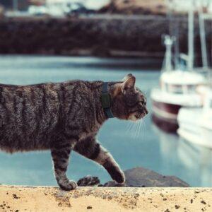 kleinste gps tracker kat