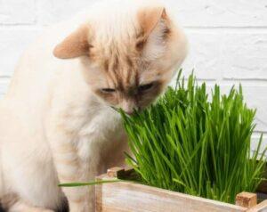 niet giftige tuinplanten voor katten