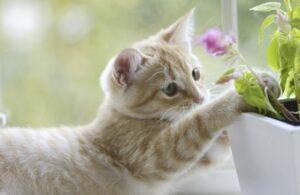 veilige planten voor katten