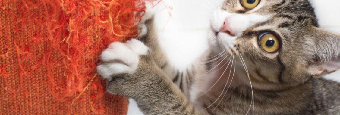 Katten nagels knippen