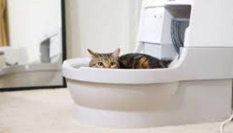 Kattenbakvulling voor Maine Coon