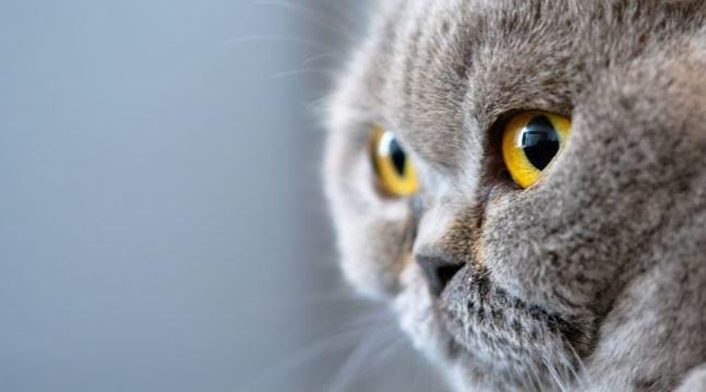 Hoe je het geslacht van een kat aan het gezicht kunt zien