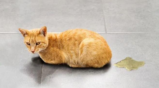 Hoe lang blijft kattenurine ruiken.