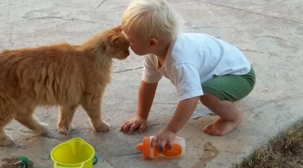 Veroorzaken Brits Korthaar Katten Allergieën Bij Babys