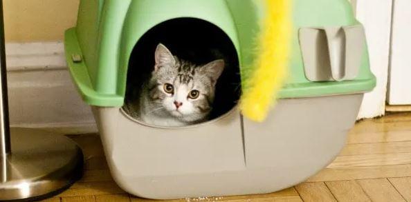 Welke grootte van kattenbak voor Britse Korthaar
