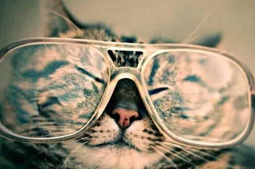 Zijn Brits Korthaar Katten Intelligent.